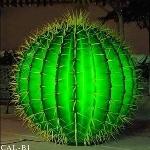 Круглый Кактус Зелёный