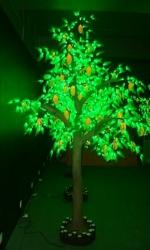 Фруктовое дерево Манго купить с доставкой в ваш город по выгодной цене