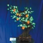 Фруктовое дерево Апельсин mini купить с доставкой в ваш город по выгодной цене