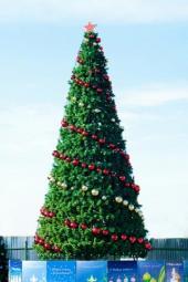 Новогодние уличные елки в Челябинске