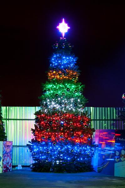 Конусная ель Светодинамическая Уральская 7 метров купить с доставкой в ваш город по выгодной цене